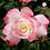 Thumbnail: Ramo de rosas Armonía
