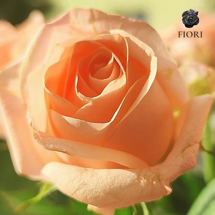 Ramo de rosas Gratitud