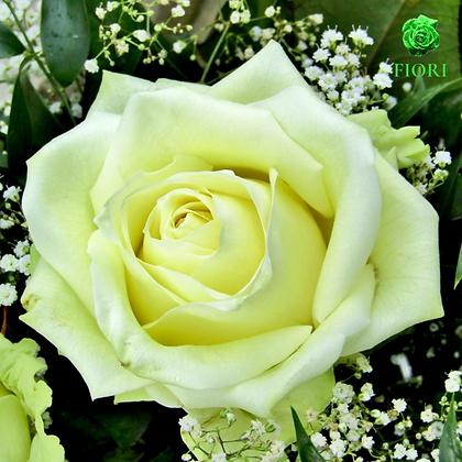 Ramo de rosas Frescura