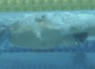 瀬戸選手に見る個性の反映した泳ぎ方論