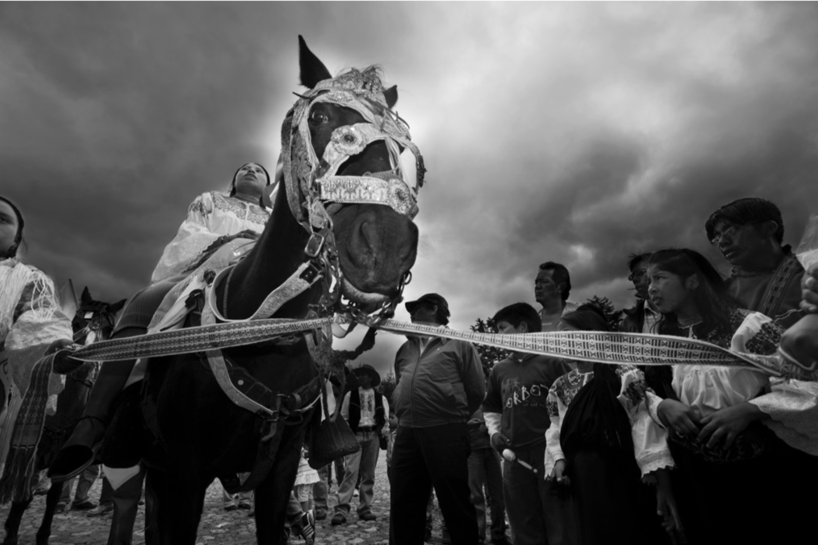 Horse during Festival