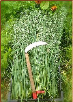 harvest tool