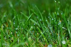 Dew on Grass.jpg