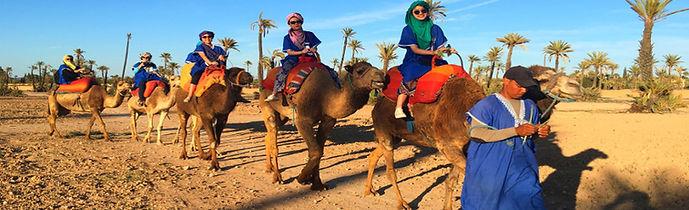 Sabaku Tours- Camel ride