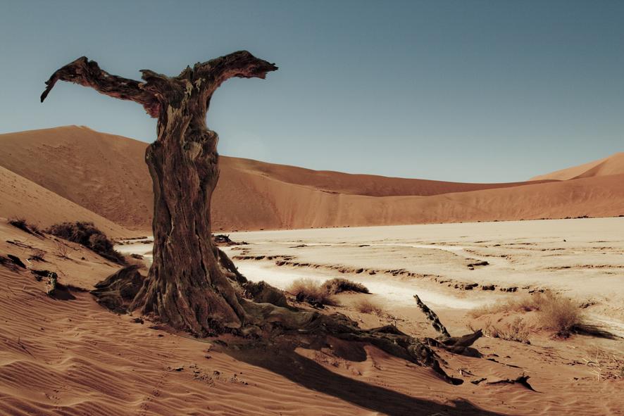 dali_tree