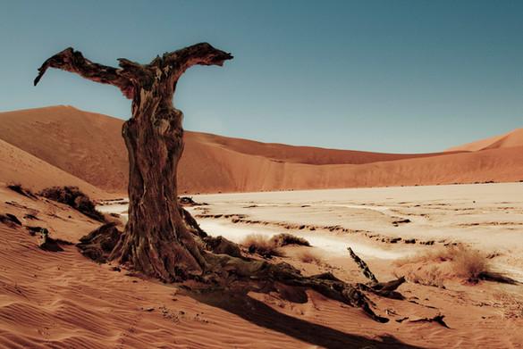 Fine art Dali tree