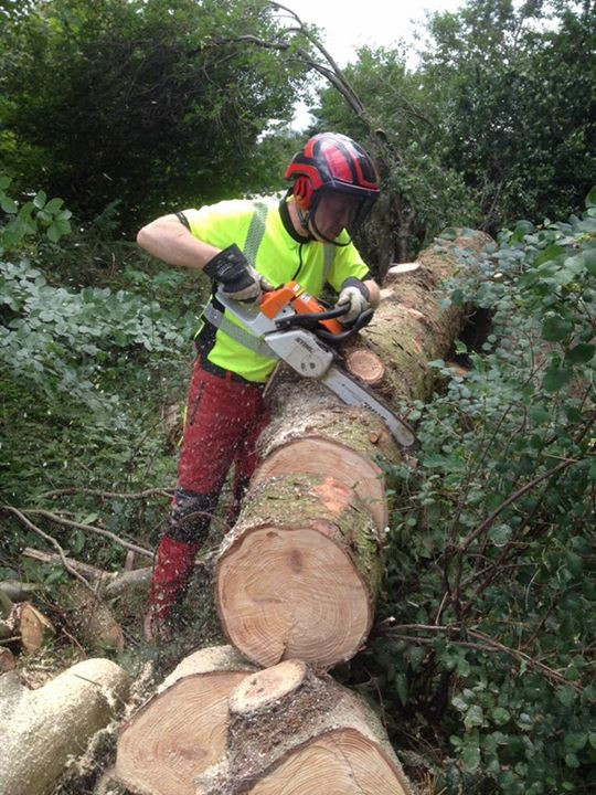 Der var særlige risici ved dette træ, så det kunne ikke topkappes.