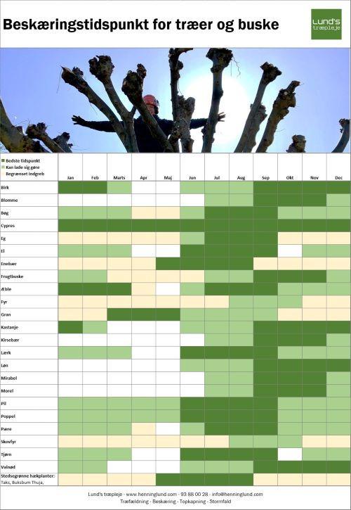 Beskæringsoversigten er vejledende. De fleste løvtræer kan beskæres året rund, dog vil det være godt at undgå tiden omkring løvspring