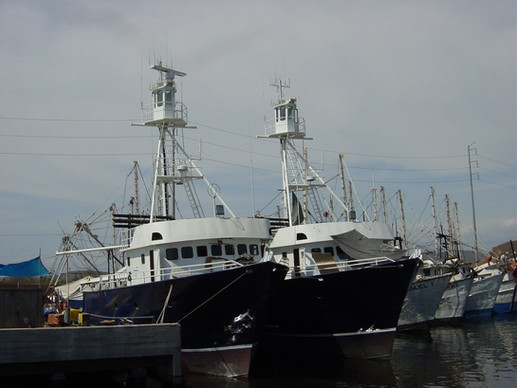 barcos atuneros chicos nuevos 05.JPG