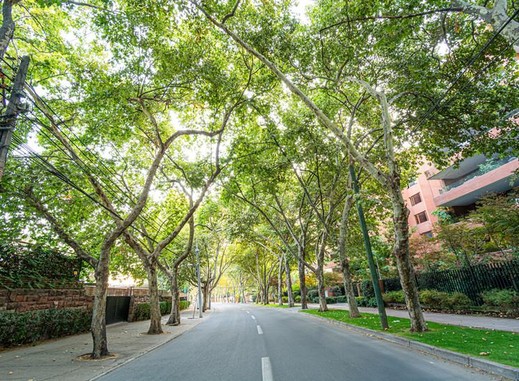 Calle Candelaria Goyenechea