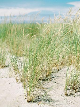 Photo of sea grass