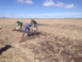 Grad studetns at the Univesity of Nebraska Panhandle Research Station in Scottsbluff applying biochar to a test plot.