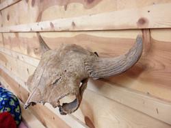 Buffalo Bracket Skull Hooker