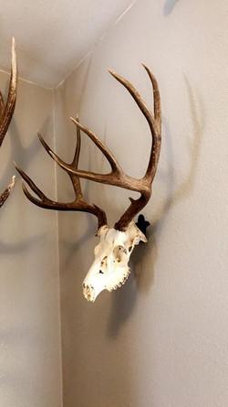 Buck Bracket 1