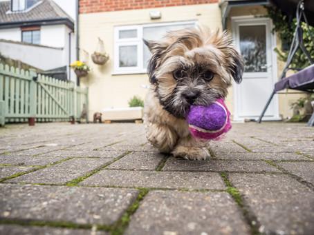 Robin's dog blog - part 6