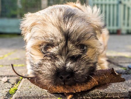 Robin's dog blog - Part 2