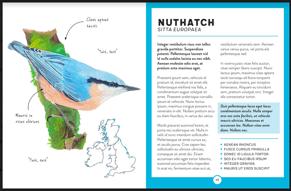 Rough interior of The Bird Book with painting of nuthatch bird