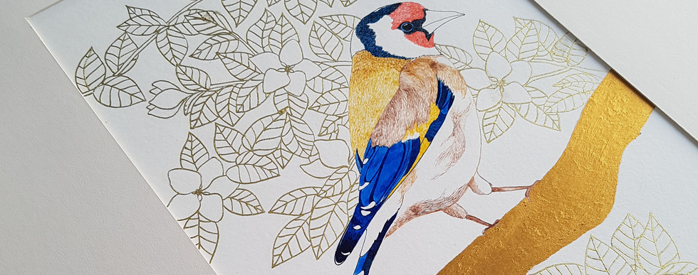 Goldfinch Pen and Ink Illustration by Howell Illustration