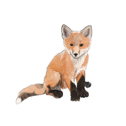 fox 2.jpg
