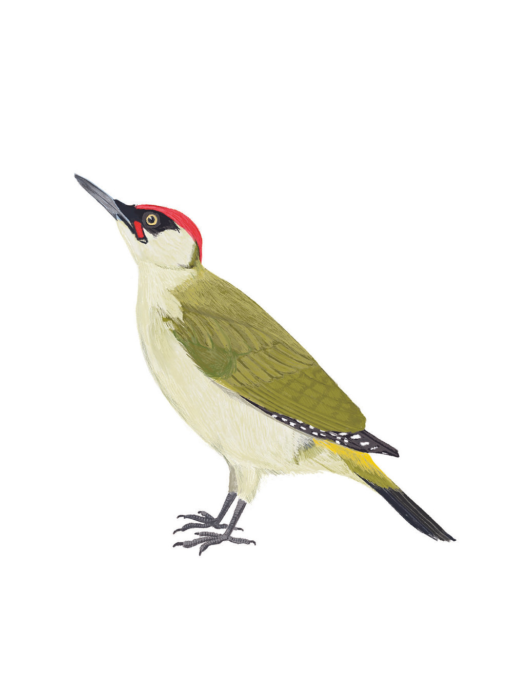 A green woodpecker digital painting after edits