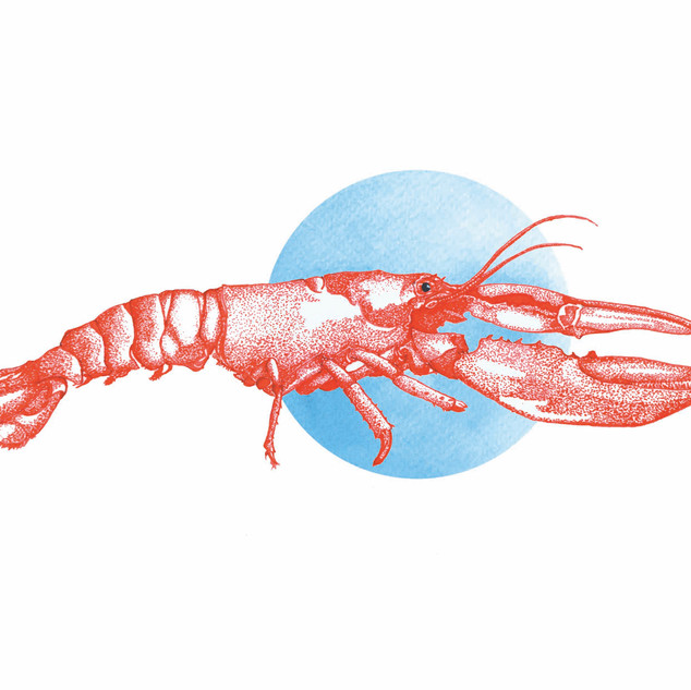 Lobster Commission.jpg
