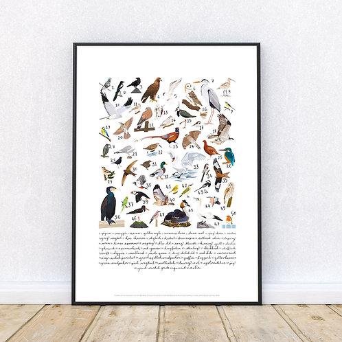 50 Birds Art Print | Original Design | Signed