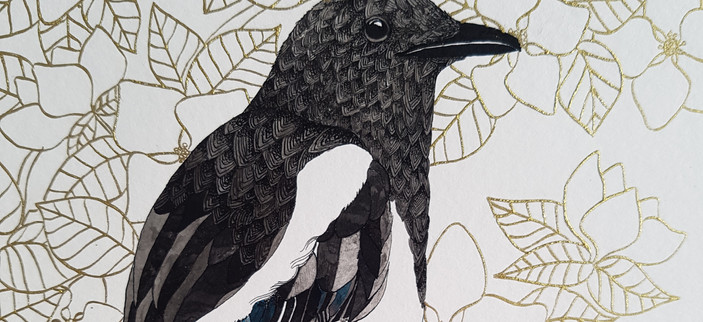 Magpie Pen and Ink Illustration by Howell Illustration