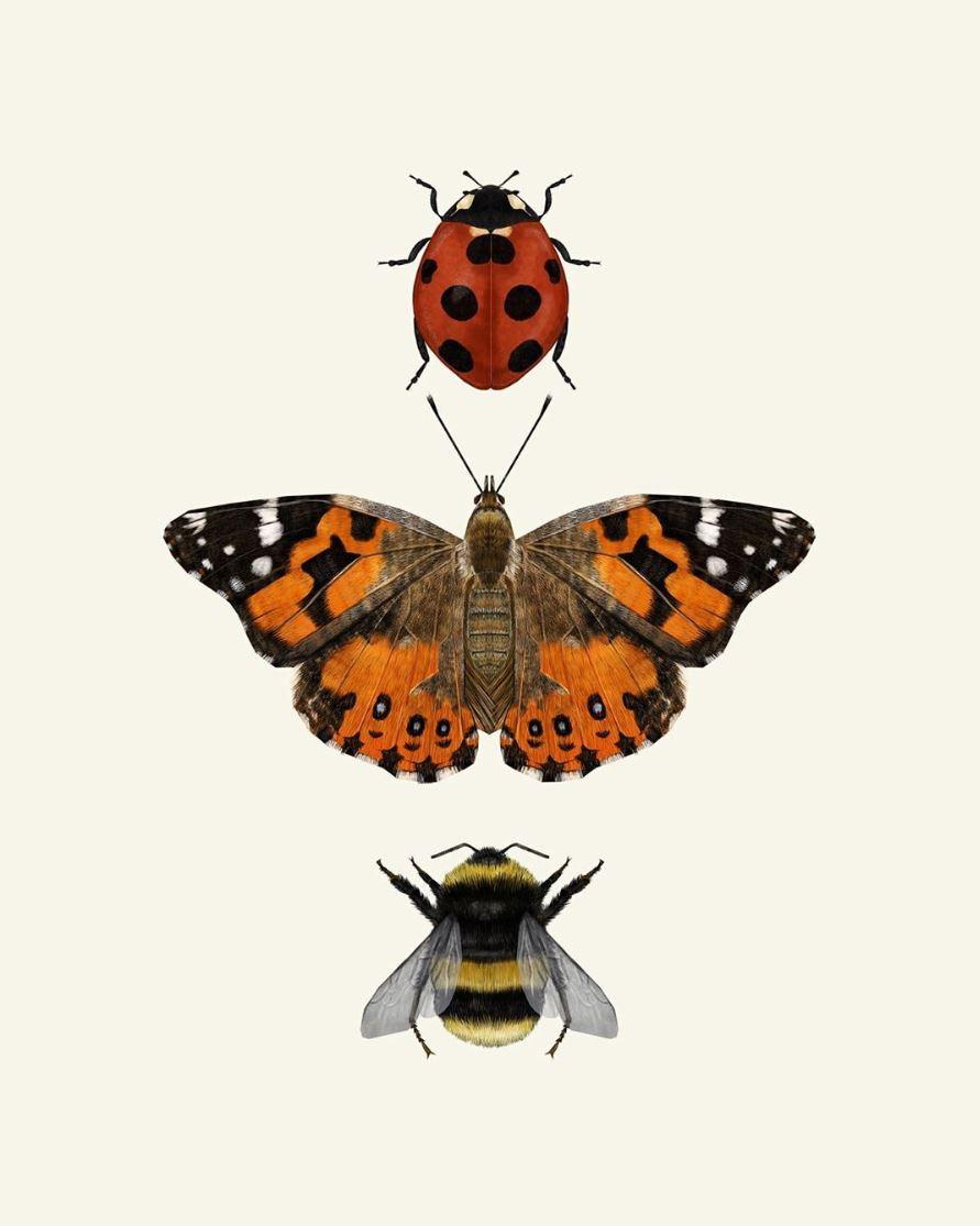 Butterfly, ladybird, bumblebee artwork by Rhian Davie