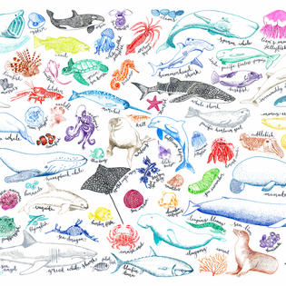A Pen and Ink Sea Creatures drawing by Howell Illustration