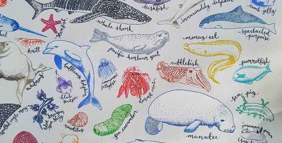 sea creatures 4.jpg