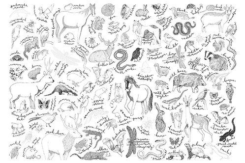 Downloadable Colouring Sheets | Includes Dinosaurs and Sea Creatures