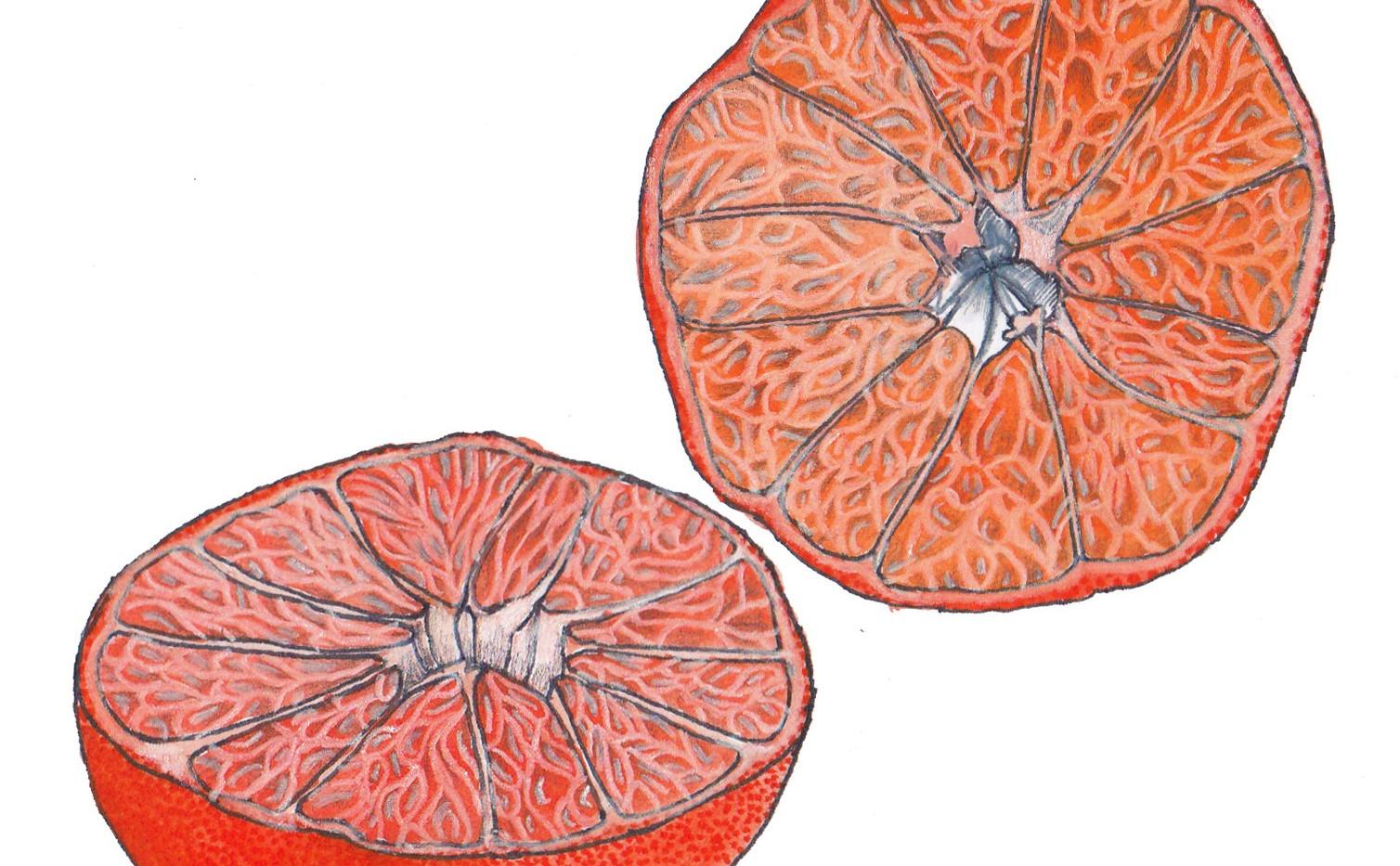 Orange Half Colour Illustration