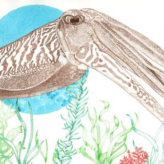 Cuttlefish_edited.jpg