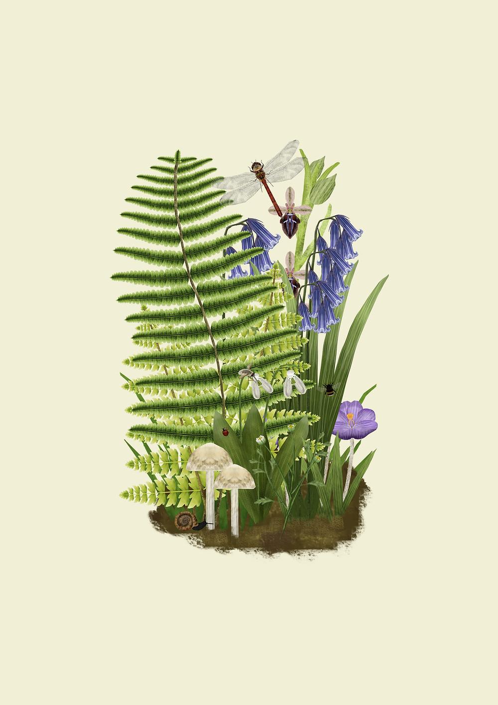 Fern illustration wildflower mushroom art by Rhian Davie