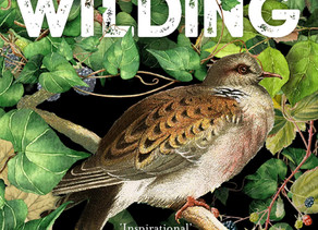 Wilding by Isabella Tree: A Book Review and Discussion