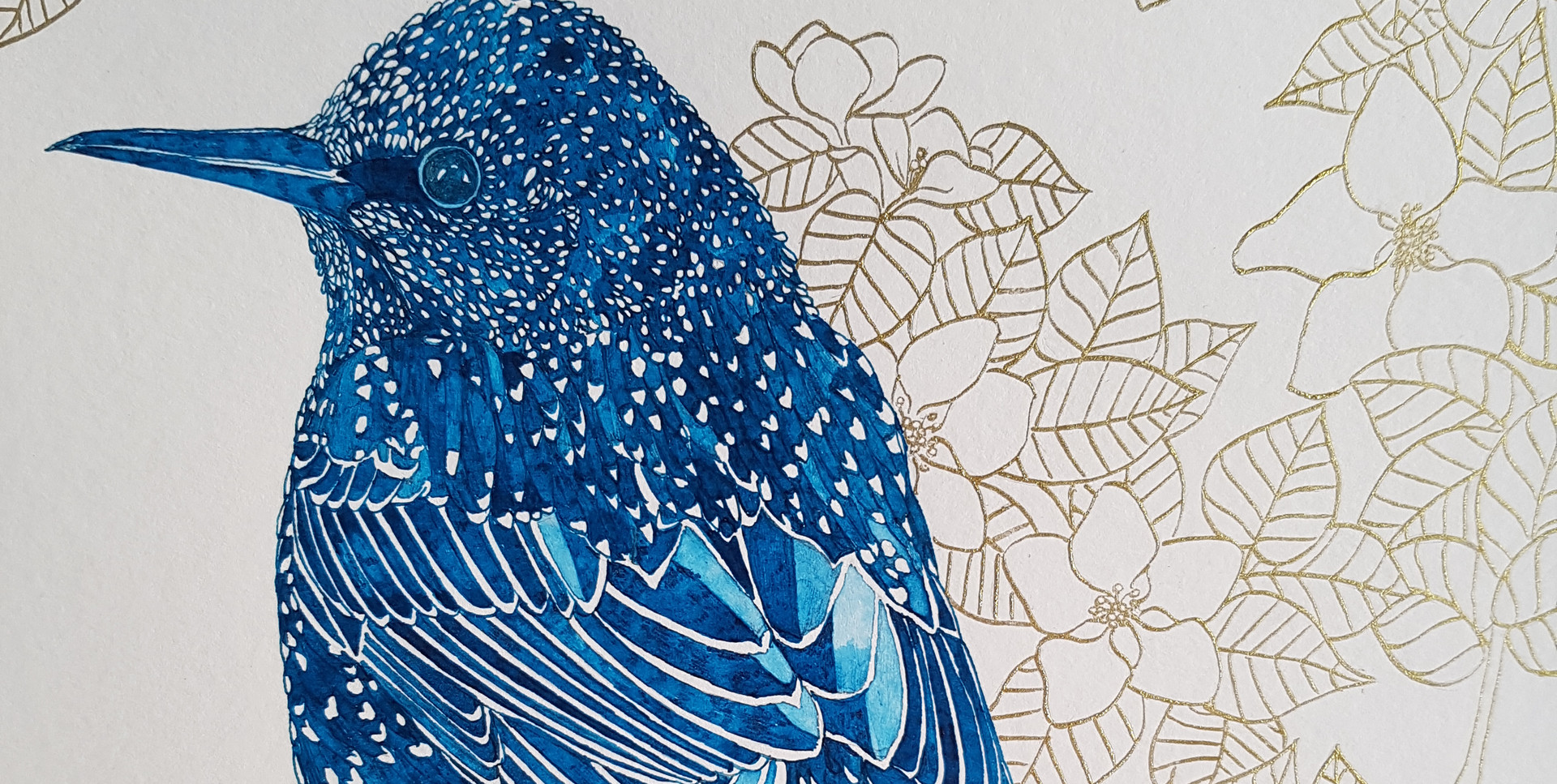 Starling Pen and Ink Drawing by Howell Illustration