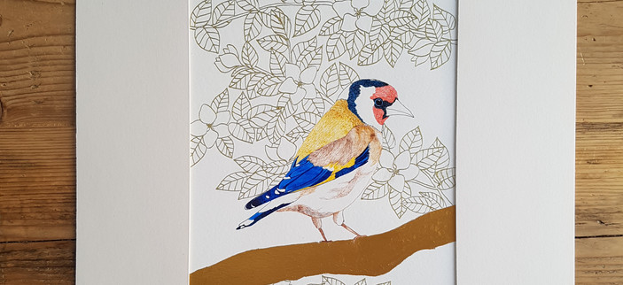 Goldfinch Drawing by Howell Illustration