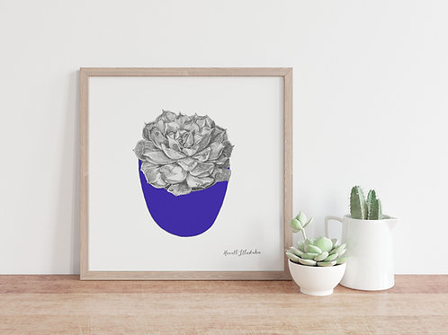 Succulent Wall Art INDIGO | From Original Drawing by Howell Illustration