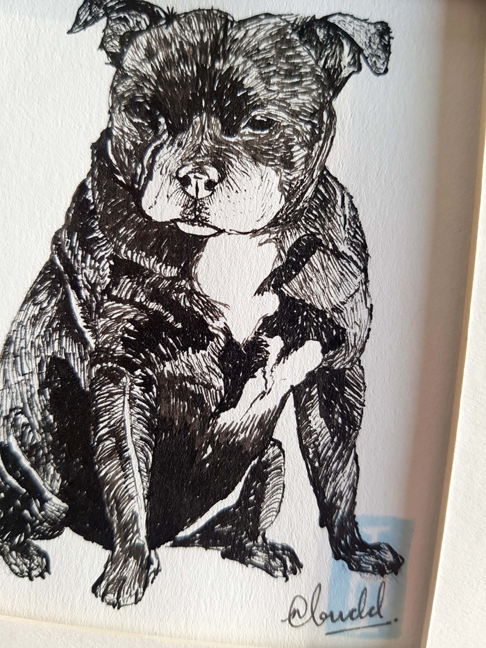 Staffordshire Bull Terrier Drawing