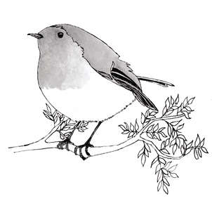 Robin Black and White Drawing for Unforgettable Walks