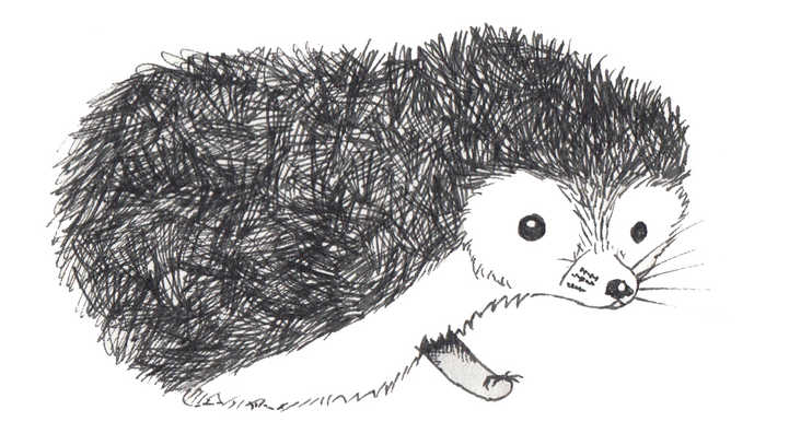 Baby Hedgehog Drawing