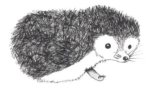 Baby Hedgehog Drawing