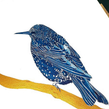 Starling drawing by Howell Illustration