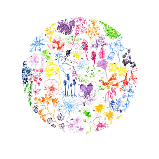 British Wildflower Drawing by Howell Illustration