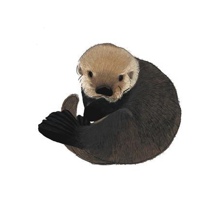 Baby Otter Illustration