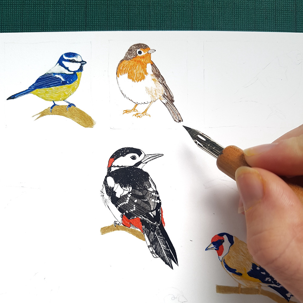 Colour ink drawings of British garden birds