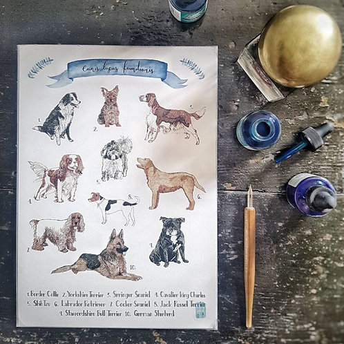 Britain's Favourite Dogs Art Print