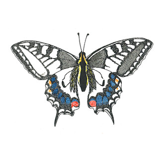 Swallow Tail Butterfly Mini Print.jpg