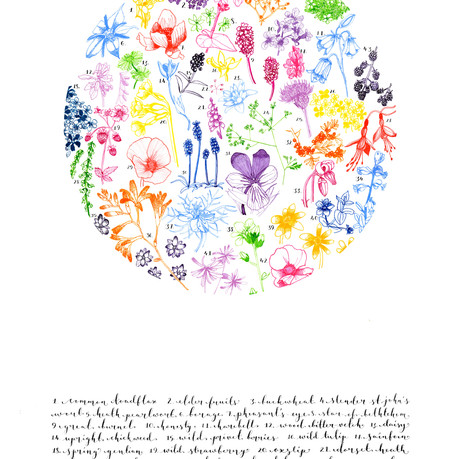 British Wildflowers Drawing by Howell Illustration