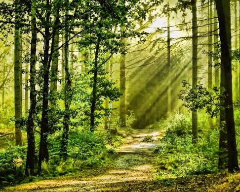 Forest Bathing and the Calming Effect of Nature